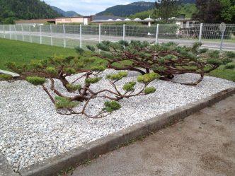 Paysagiste proche d'oyonnax, olivier morel fourrier a Moirans en Montagne dans le Jura