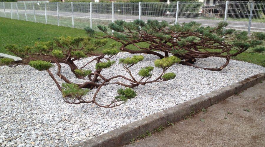 Paysagiste am nagement paysager jardinerie les jardins de la fontaine for Amenagement jardin olivier