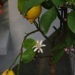 Fleurs, arbres & arbustes