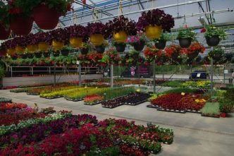 horticulture et espaces verts