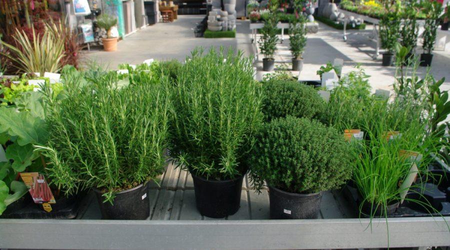 Potager plantes aromatiques jardinerie les jardins de for Plantes jardinerie
